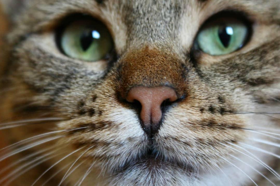 Допомога котикам